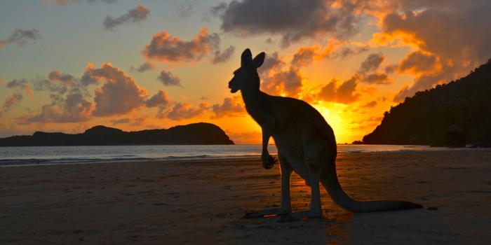 Австралия намерена запретить бинарные опционы, ...